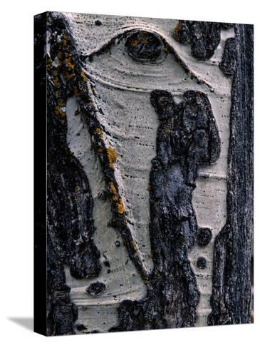 Close-up of Tree Bark-George F^ Mobley-Stretched Canvas Print