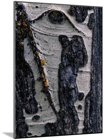 Close-up of Tree Bark-George F^ Mobley-Mounted Photographic Print