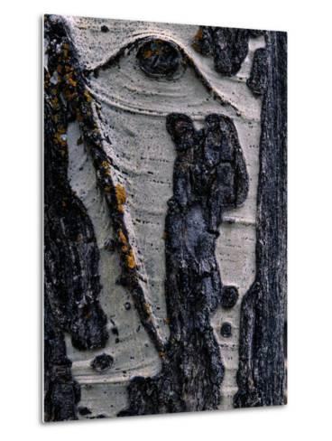 Close-up of Tree Bark-George F^ Mobley-Metal Print