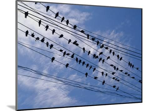 Flock of Birds Lined up on Overhead Wires-Pablo Corral Vega-Mounted Photographic Print
