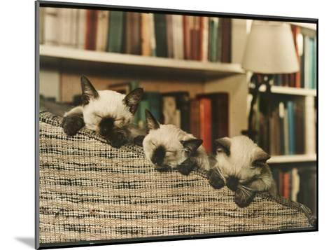 Three Siamese Kittens Take a Nap by Resting Their Heads on the Arm of a Padded Chair-Willard Culver-Mounted Photographic Print