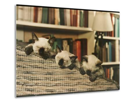 Three Siamese Kittens Take a Nap by Resting Their Heads on the Arm of a Padded Chair-Willard Culver-Metal Print
