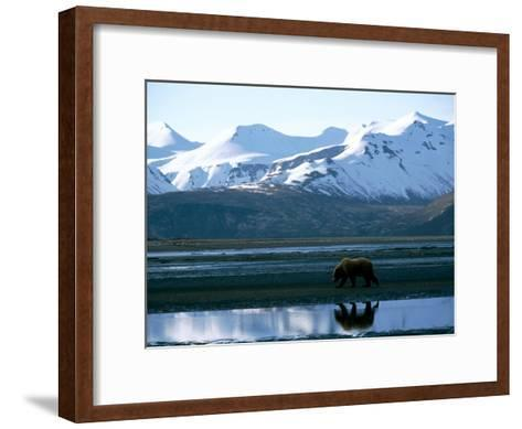 A Grizzly Bear Walks on a Mud Flat-Joel Sartore-Framed Art Print