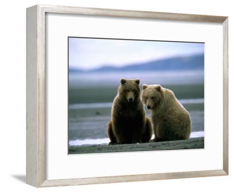 Grizzly Bear Cubs Pose for the Camera-Joel Sartore-Framed Art Print