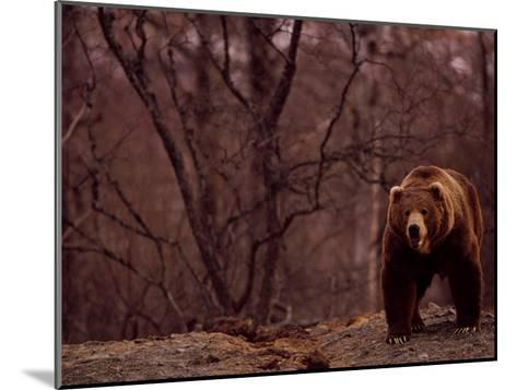 A Grizzly Bear-Joel Sartore-Mounted Photographic Print