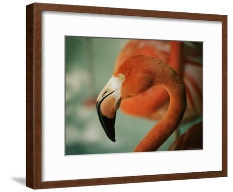 A Close View of the Curved Neck and Beak of a Pink Flamingo-Stephen St^ John-Framed Art Print