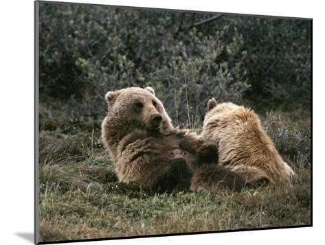 A Grizzly Mother and Her Cub Lounge Together-Michael S^ Quinton-Mounted Photographic Print