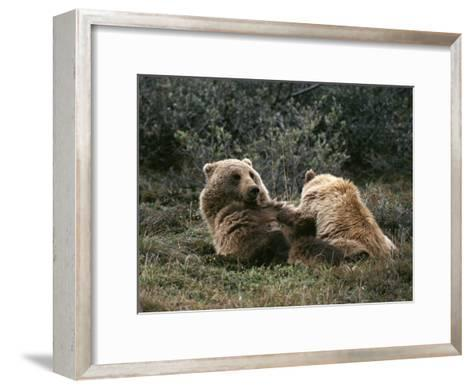 A Grizzly Mother and Her Cub Lounge Together-Michael S^ Quinton-Framed Art Print