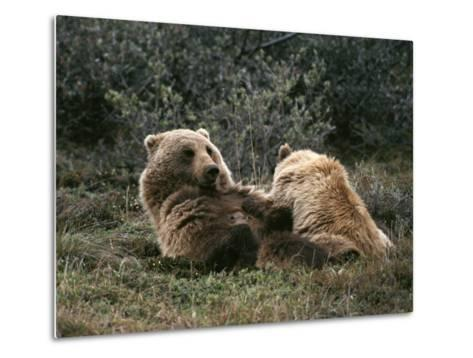 A Grizzly Mother and Her Cub Lounge Together-Michael S^ Quinton-Metal Print
