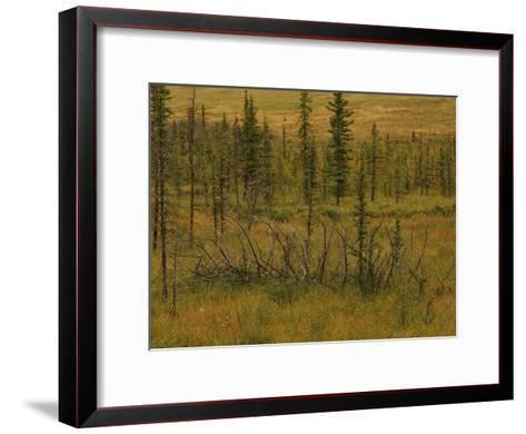 A Scenic View of a Spruce Bog-Raymond Gehman-Framed Art Print