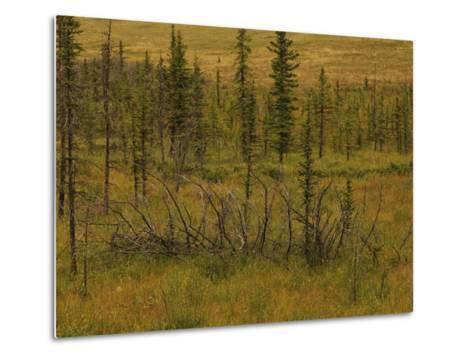 A Scenic View of a Spruce Bog-Raymond Gehman-Metal Print