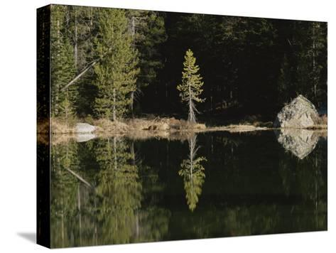 Shoreline Trees and Rock Reflected on the Surface of String Lake-Raymond Gehman-Stretched Canvas Print