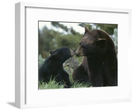 Captive American Black Bear and Cub-Norbert Rosing-Framed Art Print