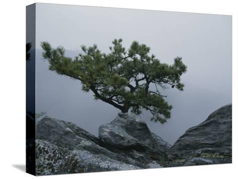 A Pine Tree Clings to a Rocky Ridge Overlooking the Shenandoah Valley-George F^ Mobley-Stretched Canvas Print
