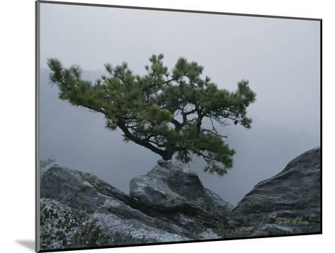 A Pine Tree Clings to a Rocky Ridge Overlooking the Shenandoah Valley-George F^ Mobley-Mounted Photographic Print