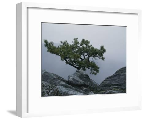 A Pine Tree Clings to a Rocky Ridge Overlooking the Shenandoah Valley-George F^ Mobley-Framed Art Print