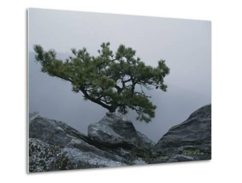 A Pine Tree Clings to a Rocky Ridge Overlooking the Shenandoah Valley-George F^ Mobley-Metal Print