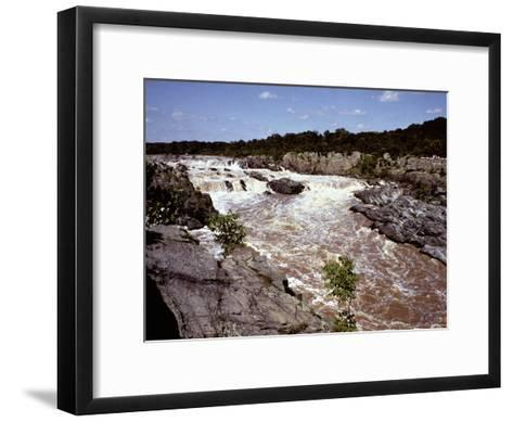 Waterfowl Stand in a Pool at Twilight-Bates Littlehales-Framed Art Print