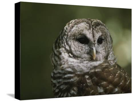 A Close View of the Head of a Barred Owl, Strix Varia-Bates Littlehales-Stretched Canvas Print