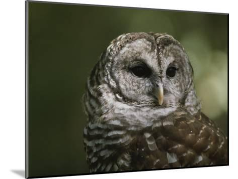 A Close View of the Head of a Barred Owl, Strix Varia-Bates Littlehales-Mounted Photographic Print