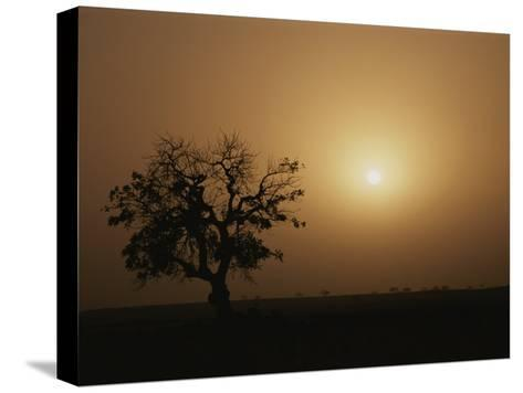 A Baobab Tree (Adansonia Digitata) Silhouetted by the African Sunset-Bobby Model-Stretched Canvas Print