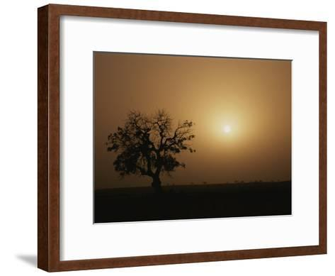A Baobab Tree (Adansonia Digitata) Silhouetted by the African Sunset-Bobby Model-Framed Art Print