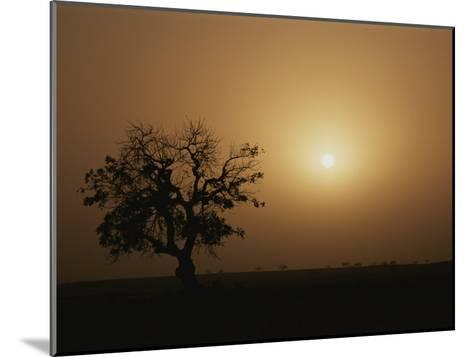 A Baobab Tree (Adansonia Digitata) Silhouetted by the African Sunset-Bobby Model-Mounted Photographic Print