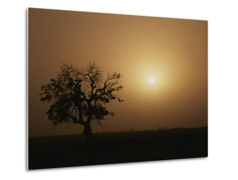 A Baobab Tree (Adansonia Digitata) Silhouetted by the African Sunset-Bobby Model-Metal Print