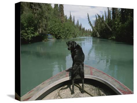 A Black Labrador Dog Travels up the Kenai River on a Boats Bow-Joel Sartore-Stretched Canvas Print