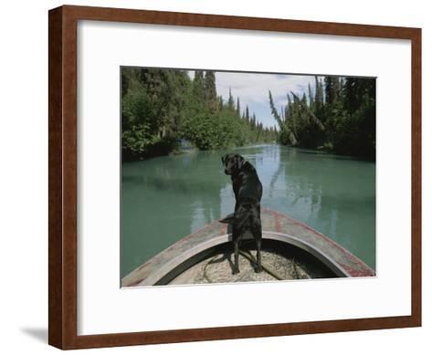 A Black Labrador Dog Travels up the Kenai River on a Boats Bow-Joel Sartore-Framed Art Print