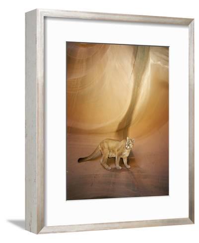 Mountain Lion on Rock Formation-Norbert Rosing-Framed Art Print