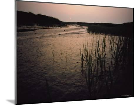 The Sun Rises over a Salt Marsh in Maine-Bill Curtsinger-Mounted Photographic Print