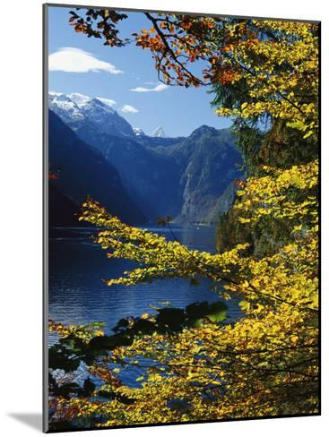 Autumn Foliage Scenic with River View, Berchtesgaden National Park-Norbert Rosing-Mounted Photographic Print