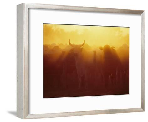 Cattle Gather at a Watering Hole at Sunset--Framed Art Print