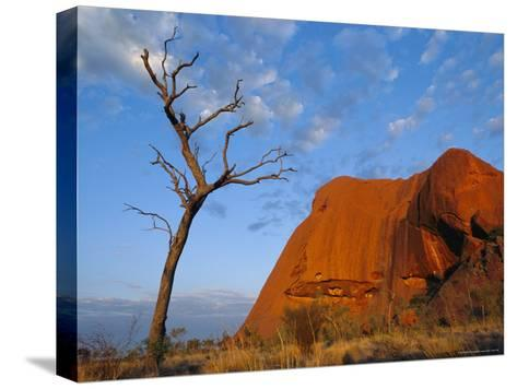 A Lone Tree Stands Near a Desert Rock Formation--Stretched Canvas Print