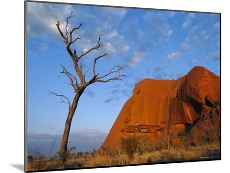 A Lone Tree Stands Near a Desert Rock Formation--Mounted Photographic Print