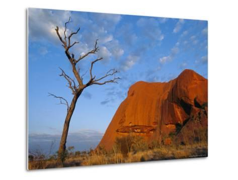 A Lone Tree Stands Near a Desert Rock Formation--Metal Print