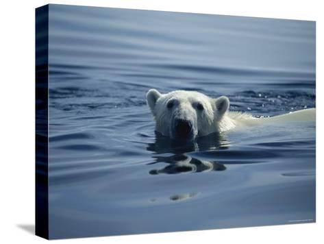 Polar Bear, Wager Bay, Northwest Territories, Canada--Stretched Canvas Print