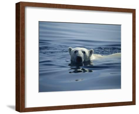 Polar Bear, Wager Bay, Northwest Territories, Canada--Framed Art Print