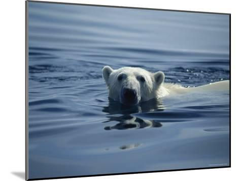 Polar Bear, Wager Bay, Northwest Territories, Canada--Mounted Photographic Print