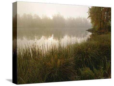 Mist Rises from a Pond-Mattias Klum-Stretched Canvas Print