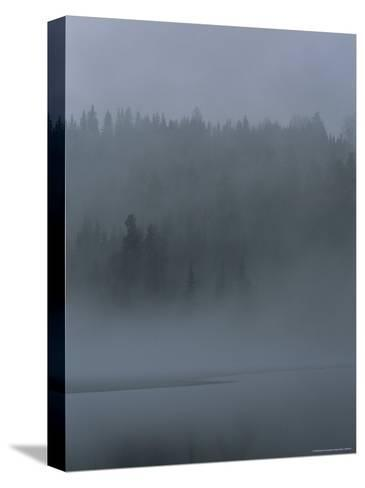 Misty View of Evergreen Forest and Water-Mattias Klum-Stretched Canvas Print