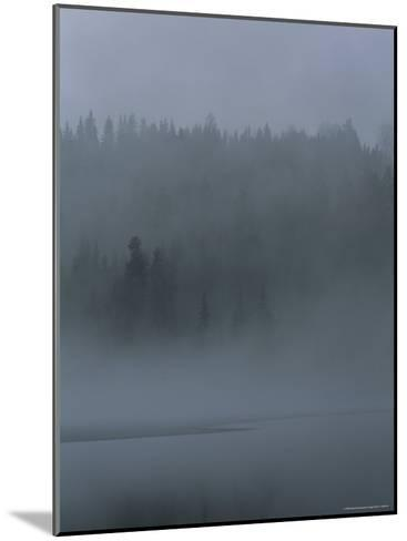 Misty View of Evergreen Forest and Water-Mattias Klum-Mounted Photographic Print