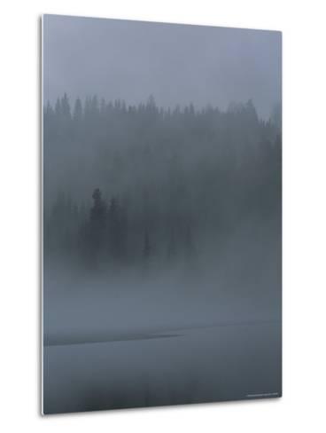 Misty View of Evergreen Forest and Water-Mattias Klum-Metal Print
