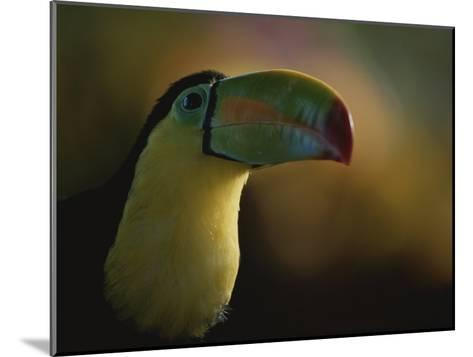 Close View of a Toucan, Costa Rica-Michael Melford-Mounted Photographic Print