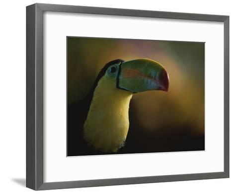 Close View of a Toucan, Costa Rica-Michael Melford-Framed Art Print