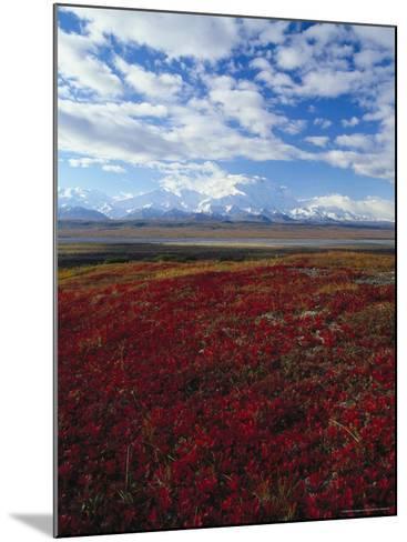 Bear Berries, Mt. Mckinley, AK-John Luke-Mounted Photographic Print