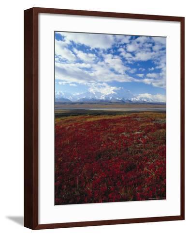 Bear Berries, Mt. Mckinley, AK-John Luke-Framed Art Print