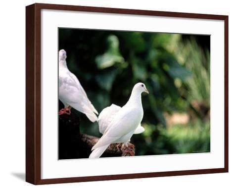 Doves-Bill Romerhaus-Framed Art Print