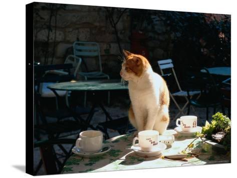 Cat on Table at a Cafe, Paris, FR-Ken Glaser-Stretched Canvas Print